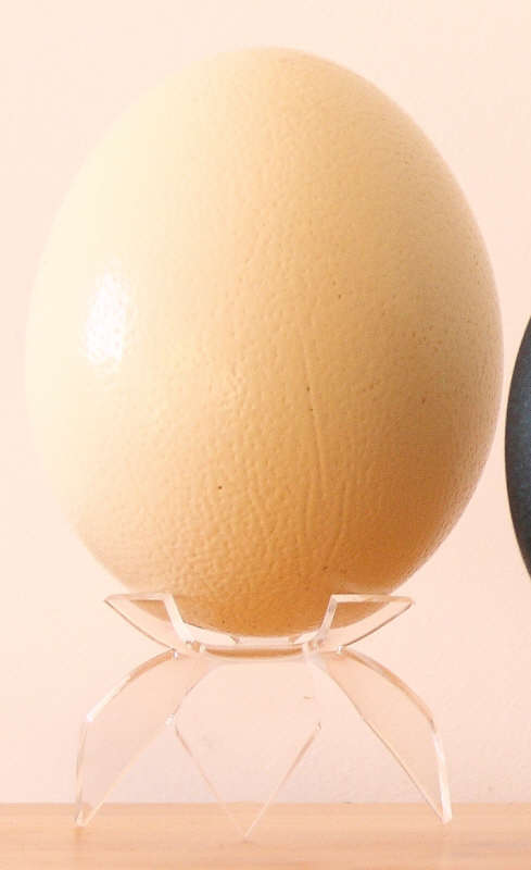 The largest eggs : osttrich eggs, with a large choice in sizes and shell roughness